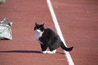 Кошка на стадионе